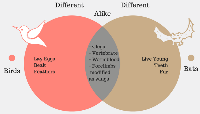 Compare and Contrast Venn Diagram Example